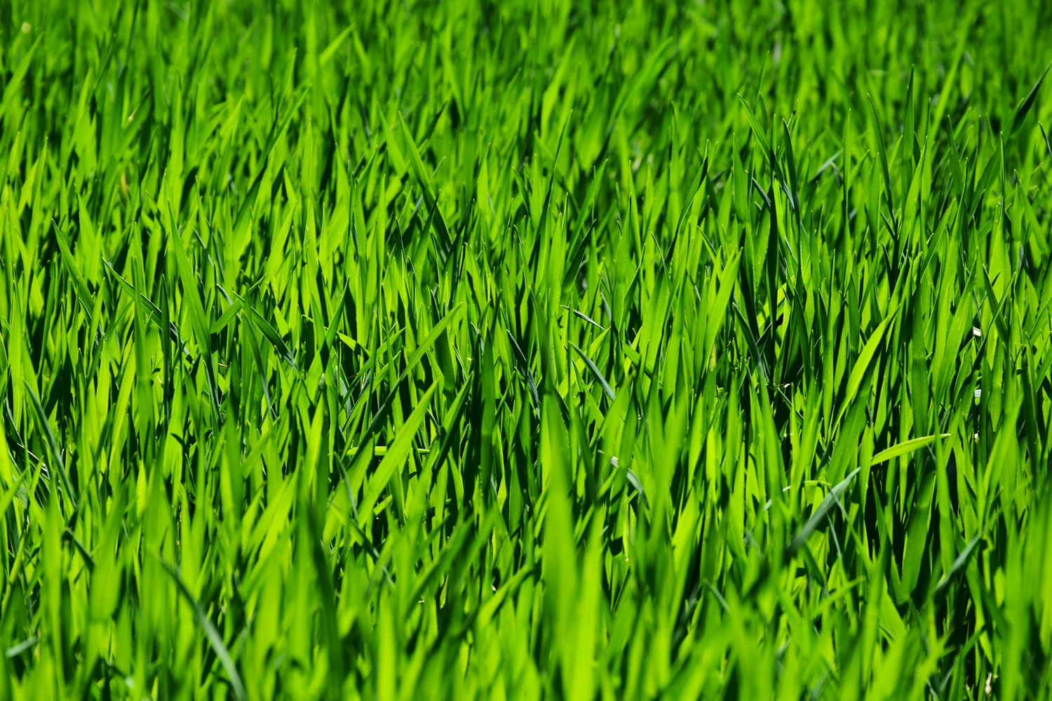 Green Grass Wallpaper Mural