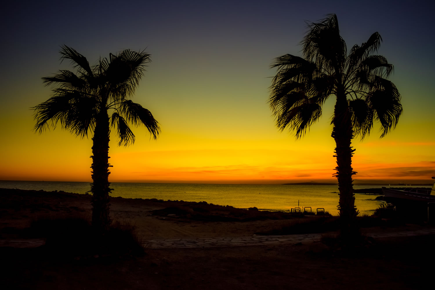 Palm Trees At Night Wallpaper Mural