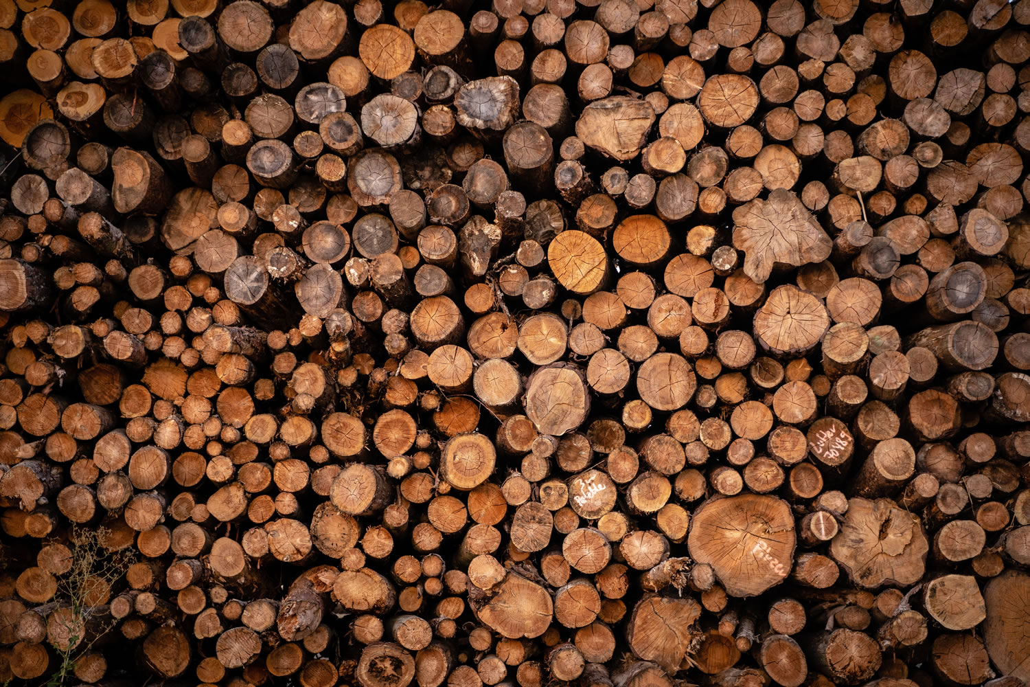 Pile Of Logs Wallpaper Mural