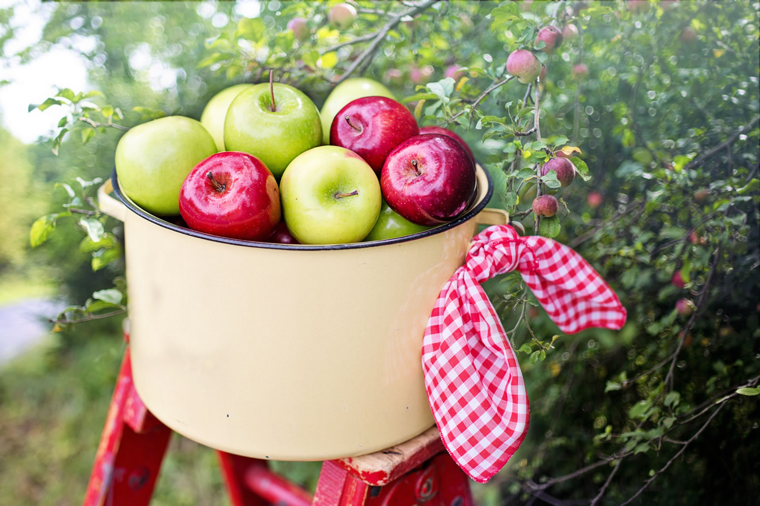 Red And Green Apples Wallpaper Mural