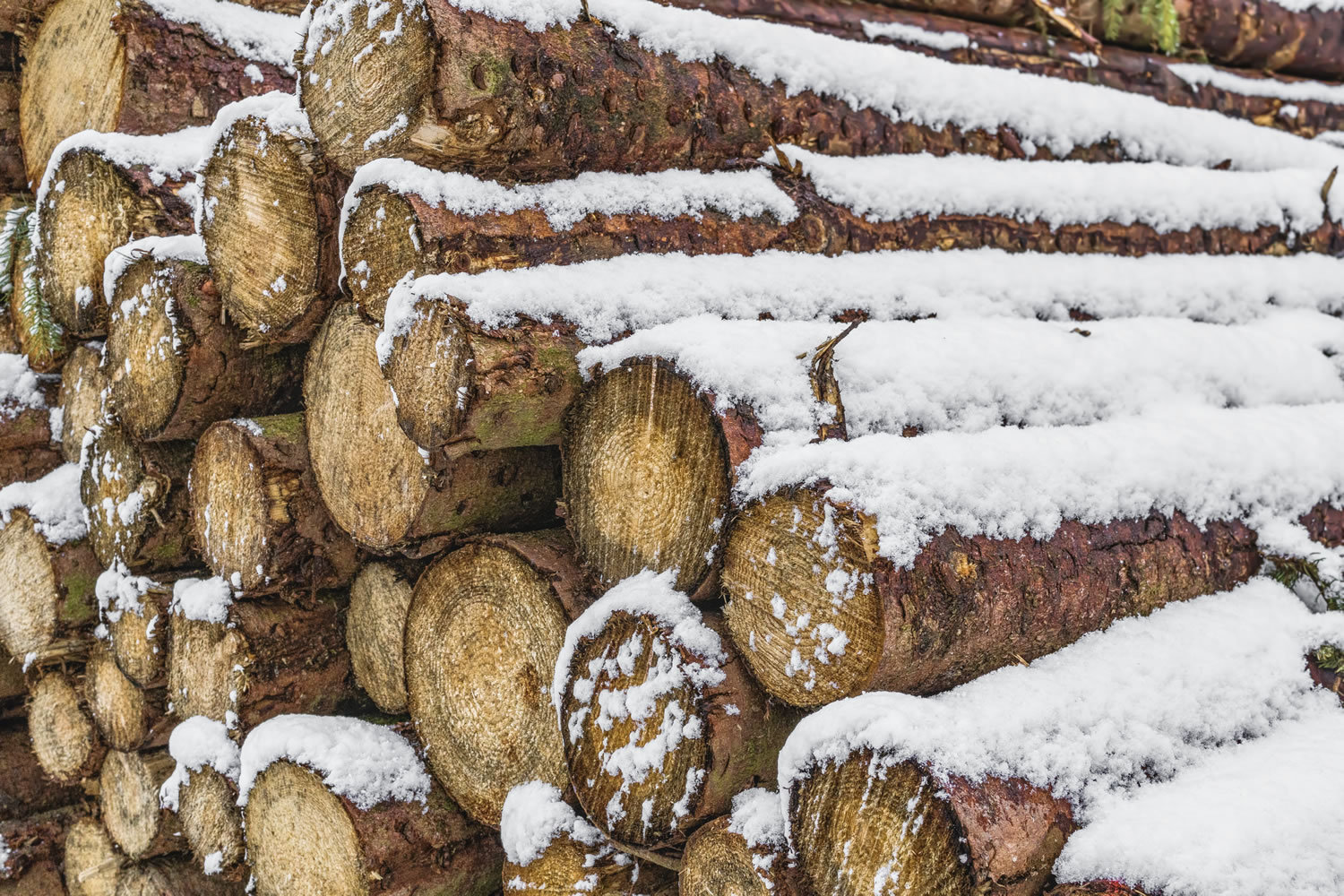 Snowy Logs Wallpaper Mural